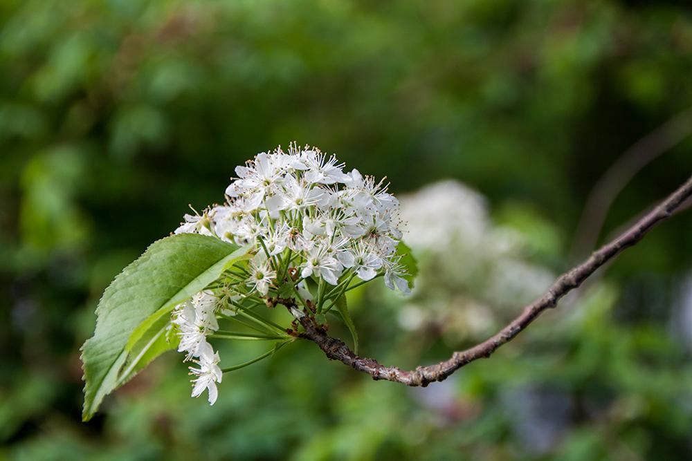 kukka3