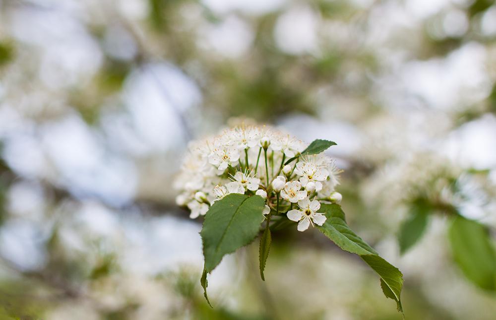 kukka7