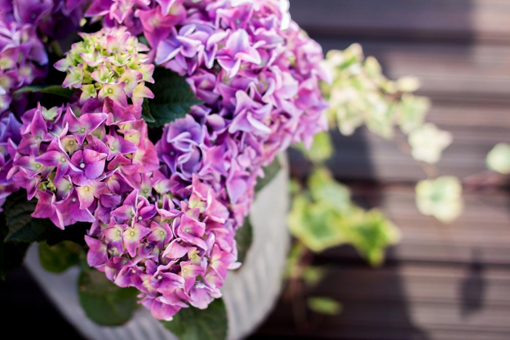 Rantasaunan terassin rakentamista ja kukkasia.